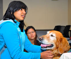 Actuarial Specialist Healing Heart Therapy Dogs Visit Love Library Nebraska Today