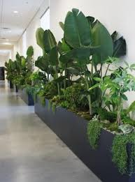 Indoor Plant For Office Desk 13 Philodendron 27 Awesome Indoor Houseplants To Brighten Up