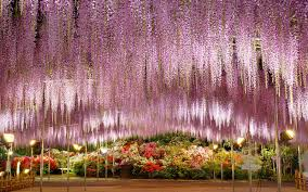 Ashikaga Flower Park by Rip Pioneer Cabin Tree Here Are 10 More Incredible Trees Worth