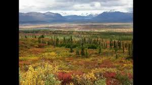 brilliant colors of denali national park alaska wallpapers denali highway alaska alaska pinterest alaska and park