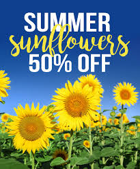 sunflowers for sale summer summer sunflowers sale columbus oh florist flowerama