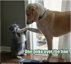 Dog Cat Meme - why does the internet love cats pcworld
