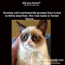Cat Facts Meme - fact grumpy cat know your meme