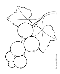 black currants fruits and berries coloring pages for kids