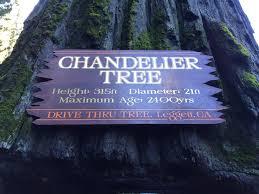 Chandelier Tree California World Chandelier Tree California Curiosities