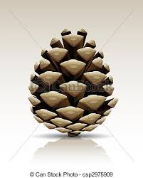 stock illustration of pine cone isolated single pine tree cone