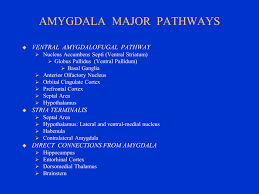 Part Of The Brain Stem That Is Involved In Arousal Limbic System Amygdala Section 4 Chapter 6 Neuroscience Online