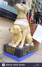 Blind Charity Guide Dogs For The Blind U0027 Charity Collection Box Stock Photo