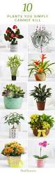 10 Perennials That Thrive In by 25 Unique Indoor Flowers Ideas On Pinterest Flowering House