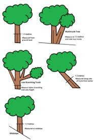 tree measurement wikipedia