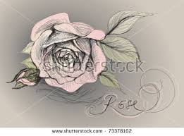 rose flower realistic sketch not autotraced stock vector 73378102