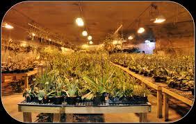 grow light tips atlantis hydroponics blog