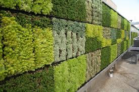 tjsls green wall is here thomas jefferson of law the living