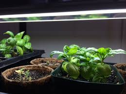 Indoor Vegetable Gardening Beginner by Porchside Gardening For Food And Fun Phipps Experts Offer