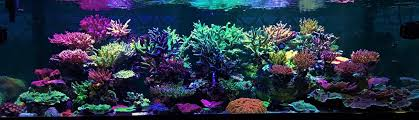 Aquascape Reef Coral Gallery Under Reef Aquarium Led U2022 Orphek Aquarium Led Lighting