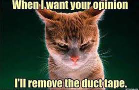 Free Memes Online - want your opinion funny cat meme watch free latest movies online