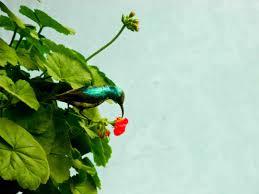 bird attracting native plants flowers that attract butterflies and birds balcony garden web
