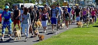 san jose bark in the park festival is one for the dogs cecily