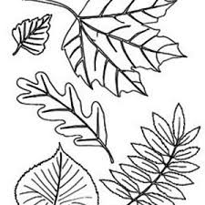 autumn tree without leaves in fall leaf coloring page autumn tree