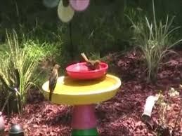 Flower Pot Bird Bath - birds bathing in diy bird flower pot bath youtube