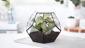favorite terrarium plants sunset