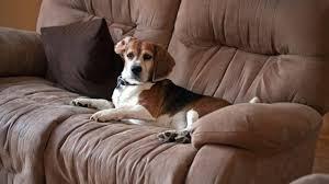 comment nettoyer un canapé l astuce pour nettoyer un canapé facilement