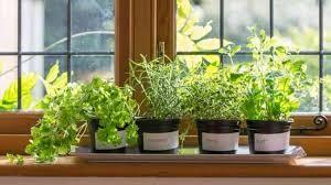 herb garden indoor indoor herb garden to beautify your home bellissimainteriors