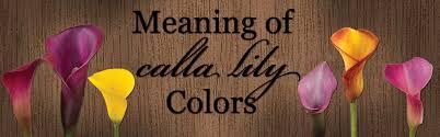 calla colors meaning of calla colors calcallas