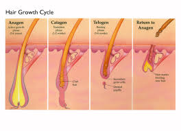 growing out pubic hair how fast hair grows and other hairy science