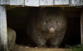 Wildfire Scientific Definition by Wombat Wildfire Pire
