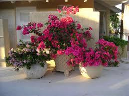 flower pot teresa garden ideas pinterest spring container planting