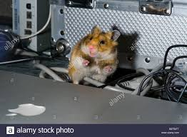 mac bureau free range free range hamster bureau attitude desk pc computer mac