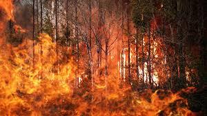 Wildfire Yukon by Wildfires Cross Alaska Canada Border