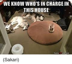 Funny Memes Cats - we know who s in charge in this house funny cat sitecom sakari