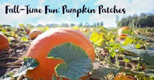 fall time fun pumpkin patches dullesmoms com