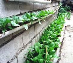vegetable gardening philippines the garden inspirations