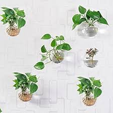 Hanging Wall Planters Amazon Com Mkono 2 Pack Wall Hanging Plant Terrarium Glass