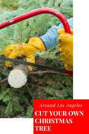 89 best socal fun with kids images on pinterest holiday