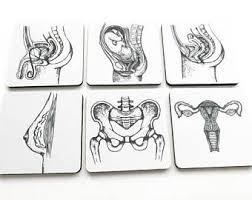 female anatomy etsy