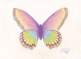 18 butterfly drawings ideas design trends premium psd