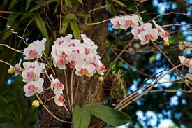 orchid plant how to grow and care for mounted orchids
