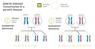 Cause Of Color Blindness Genetic Diseases U003e Institut Des Biothérapies