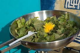 cuisine des plantes sauvages florenville syndicat d initiative de florenville