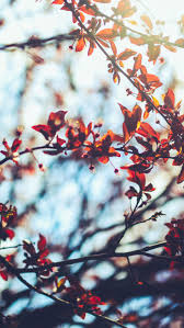 cute fall desktop backgrounds 8 free autumn inspired iphone 7 plus wallpapers autumn iphone