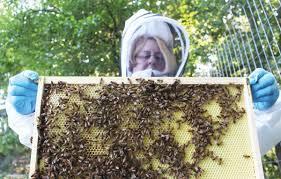 Backyard Beehive Beginner Beekeeping The Milton Independent Onlinethe Milton