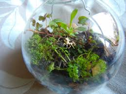large glass diy terrarium ornament clossette