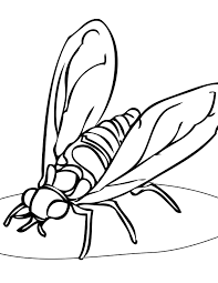 hoverflies coloring page handipoints