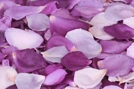 real petals real flower petals wedding seeker