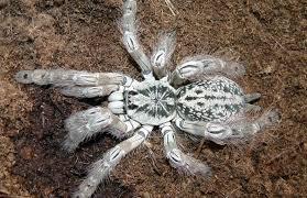 scientists study spider venom for research
