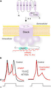 more than a pore ion channel signaling complexes journal of